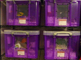 & Vectis Hamstery and Exotics - Making a Bin Cage
